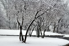 Árboles de la nieve Imagen de archivo