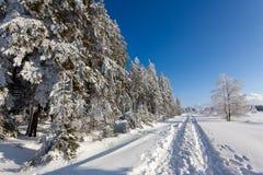 Árboles de la nieve del invierno que caminan la trayectoria, altos pantanos, Bélgica Fotografía de archivo libre de regalías