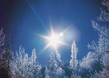 Árboles de la nieve de la luz del sol fotografía de archivo libre de regalías