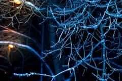 Árboles de la noche del invierno en hielo Fotografía de archivo