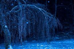Árboles de la noche del invierno en hielo fotos de archivo