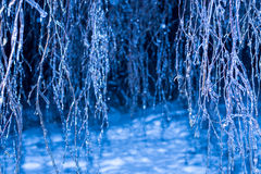 Árboles de la noche del invierno en hielo imagen de archivo