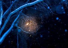 Árboles de la noche del invierno en hielo foto de archivo