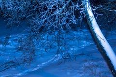 Árboles de la noche del invierno en hielo Foto de archivo libre de regalías