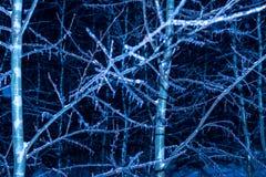 Árboles de la noche del invierno en hielo Imagenes de archivo