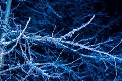 Árboles de la noche del invierno en hielo Fotografía de archivo libre de regalías