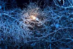 Árboles de la noche del invierno en hielo imágenes de archivo libres de regalías