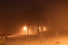 Árboles de la noche en la niebla Fotos de archivo libres de regalías