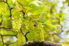 Árboles de la primavera Foto de archivo