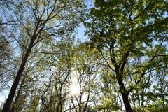 Árboles de la primavera Imagenes de archivo