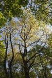 Árboles de la primavera Fotografía de archivo