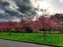 Árboles de la primavera Foto de archivo libre de regalías