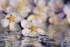 Árboles de la primavera de las flores Foto de archivo