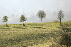 Árboles de la primavera en las montañas de Taunus Imagen de archivo libre de regalías