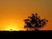 Árboles de la puesta del sol Imágenes de archivo libres de regalías