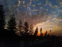 Árboles de la puesta del sol Fotos de archivo libres de regalías