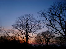 Árboles de la puesta del sol Imagenes de archivo