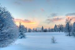 Árboles de la puesta del sol de la nieve del invierno Imagen de archivo libre de regalías