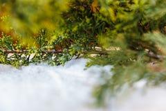 Árboles de la ramita en la nieve Imagenes de archivo