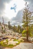 Árboles de la secoya gigante Fotos de archivo