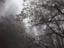 Árboles de la selva en la niebla imagen de archivo libre de regalías