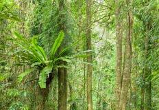 Árboles de la selva tropical Imagen de archivo libre de regalías