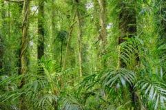 Árboles de la selva tropical Foto de archivo
