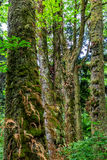Árboles de la selva tropical con el musgo y los helechos Imagen de archivo libre de regalías