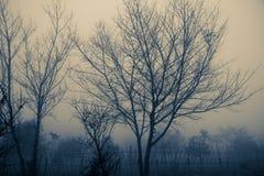 Árboles de la silueta Foto de archivo libre de regalías