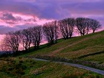 Árboles de la silueta en puesta del sol del invierno al lado del camino de la montaña Fotos de archivo libres de regalías
