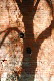 Árboles de la sombra Fotografía de archivo