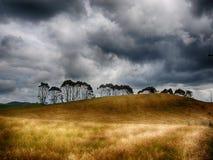 Árboles de la tormenta Imagenes de archivo