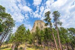 Árboles de la torre y de pino de los diablos Imagen de archivo libre de regalías