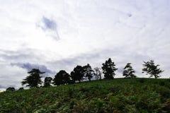 Árboles de las montañas Irlanda de Glendalough Wicklow Imagenes de archivo