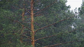 Árboles de lluvia del huracán almacen de video