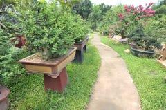 Árboles de los bonsais Imagen de archivo