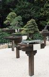 Árboles de los bonsais Fotografía de archivo