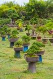 Árboles de los bonsais - jardín Fotografía de archivo