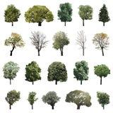 Árboles de los ejemplos del vector Fotos de archivo libres de regalías