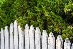 Árboles de madera viejos blancos de la cerca y de pino Fotos de archivo libres de regalías