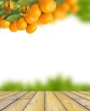 árboles de mandarina Fotos de archivo