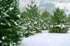 Árboles de navidad 1 Imágenes de archivo libres de regalías
