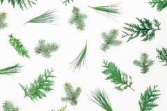 Árboles de navidad del invierno en el fondo blanco Concepto de la Navidad o del Año Nuevo Endecha plana, visión superior Fotos de archivo libres de regalías