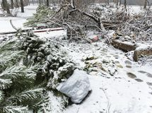 Árboles de navidad en contenedor después de la Navidad foto de archivo libre de regalías