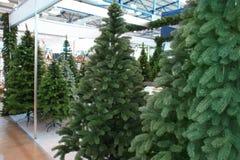 Árboles de navidad en el centro Imagen de archivo libre de regalías