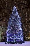 Árboles de navidad iluminados en el parque del arroz Foto de archivo libre de regalías