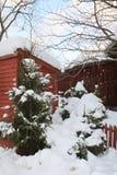 Árboles de navidad Nevado fotografía de archivo