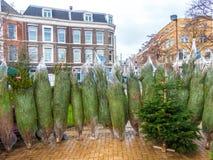 Árboles de navidad para la venta Fotos de archivo libres de regalías