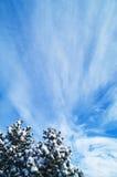 Árboles de navidad y cielo Foto de archivo libre de regalías