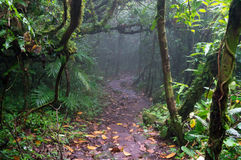 Árboles de niebla en el bosque de la nube de Mombacho Fotos de archivo